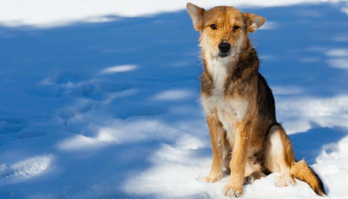 Can Olive Oil Help Your Dogs Dry Skin?