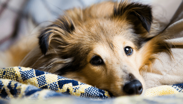 7 Tips For Cleaning up Dog Hair.