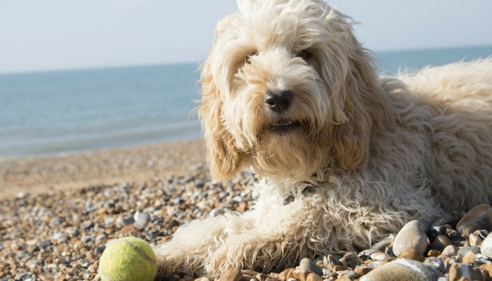 5 Reasons Why Play is Important For Dogs