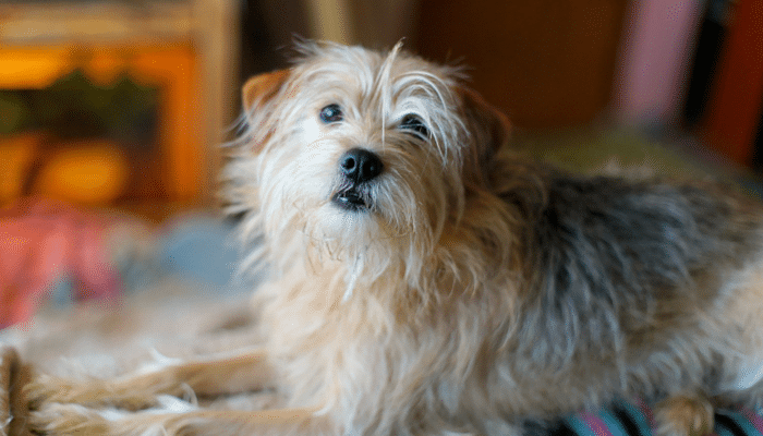 7 Unexpected Uses For Dog Hair