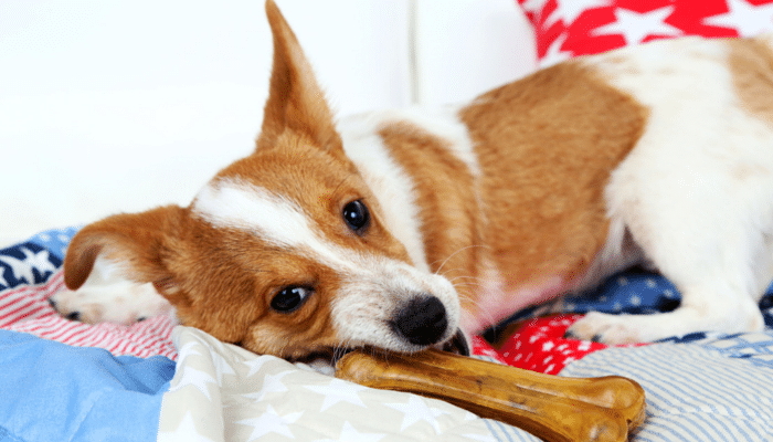 Why do dogs hoard their toys?