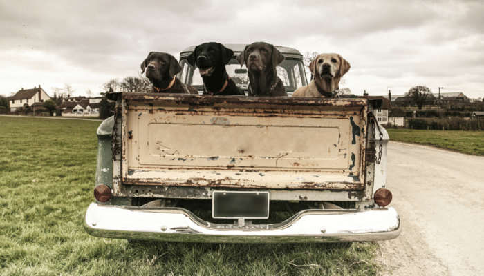 Please Don't Drive Around With Your Dog in the Back of Your Truck