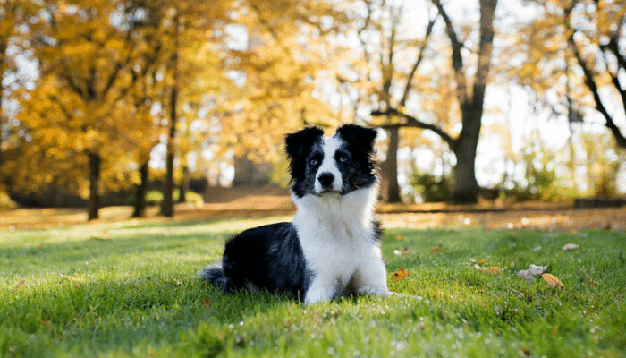 5 Things to Know About Ticks & Your Dog