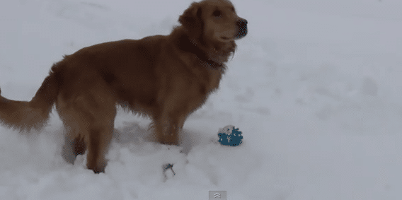 funny videos of confused dogs
