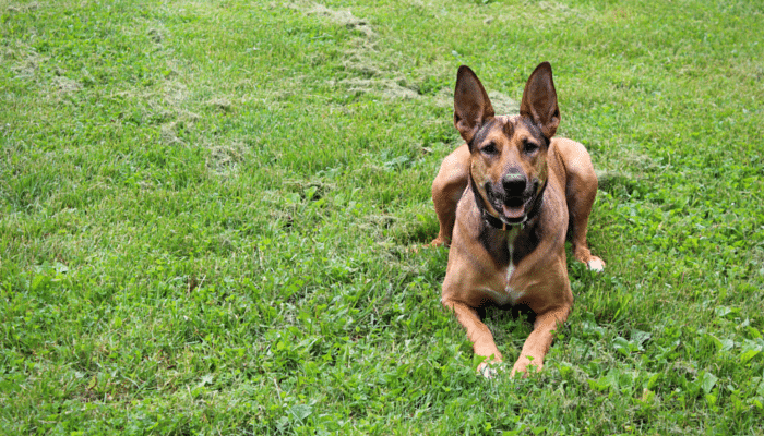 Don't Blame the Dog - How I Created My Dogs Bad Habits