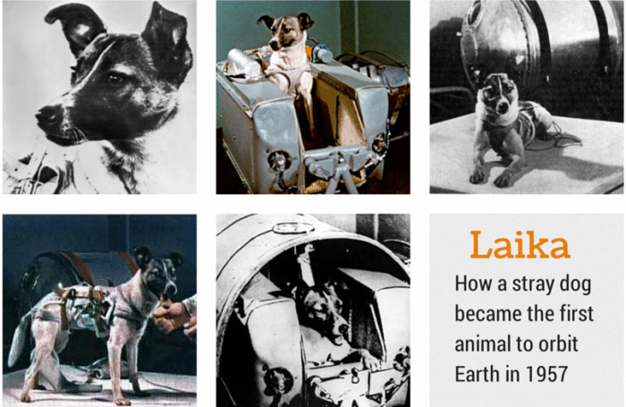 laika first animal in space