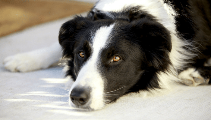 The Problem With Using the Word Guaranteed in Dog Training